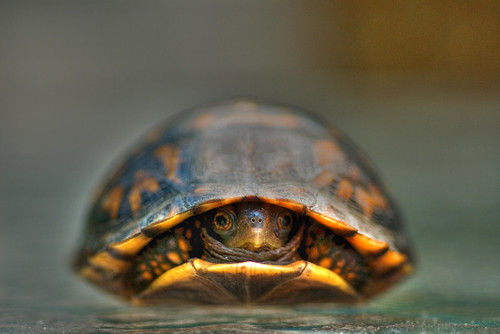 Baby Turtle | by FotoDawg