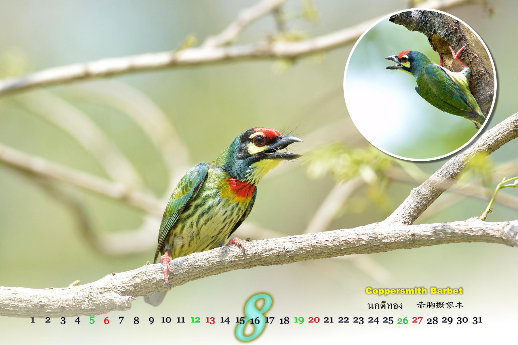 Thai Bird Calendar 2017_08