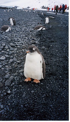 "Antarctica Trip 2001 | by John ""Pathfinder"" Lester"