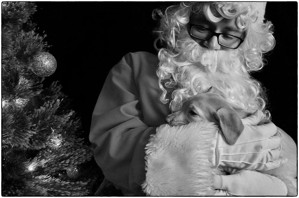 Santa And Puppy, December 04, 2016