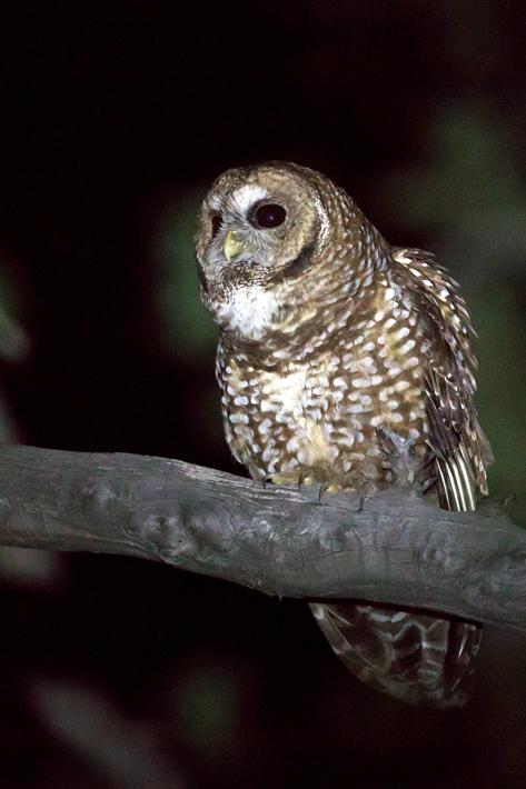 051416_owl22