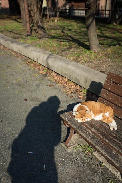 公園のベンチで寝るネコと人影