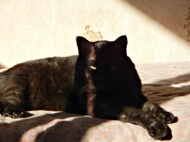 чёрный кот Муся 4 | Musia the black cat