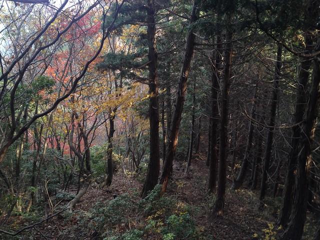 天狗堂 岩尾谷登山道 森の境界