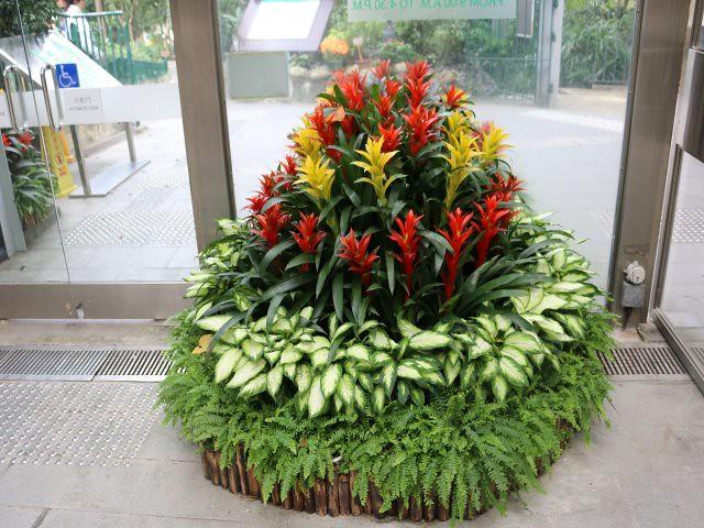 gradina zoologica si botanica obiective turistice gratuite Hong Kong 7