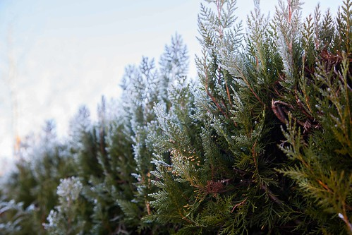 Helada de -6º c en Orozko #DePaseoConLarri #Flickr -4620