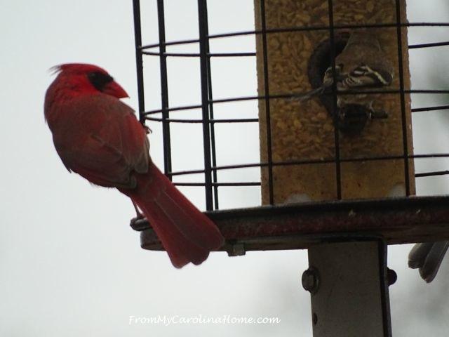 December Bird visitors 6