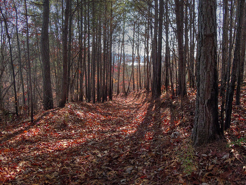 Oak Ridge Nature Trail