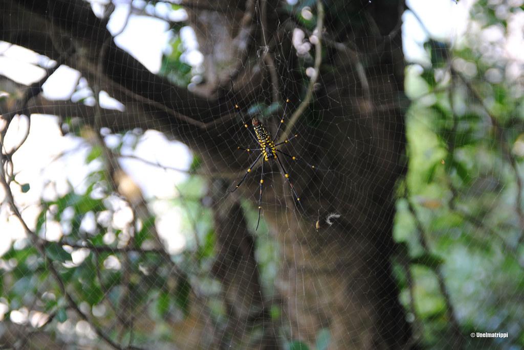 Jättimäinen hämähäkki Circle Walkin varrella
