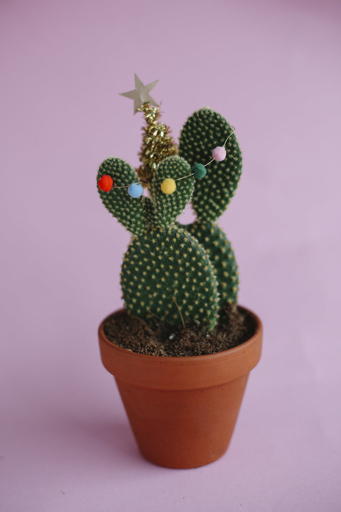 MB1_8831edB, thecurlyhead, amelie n., the curly head, DIY, last minute gift idea, christmas-cacti, cacti, Geschenkidee, Weihnachtskaktus, Weihnachtskakteen, blog,