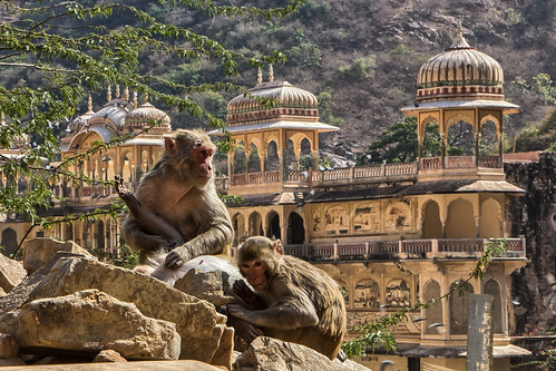 Rajashtan, Galta Monkey Temple