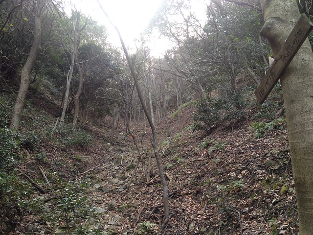 月見の森 さえずりの小径 田代池分岐
