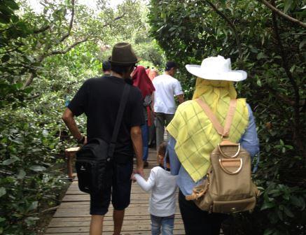 suasana hutan mangrove