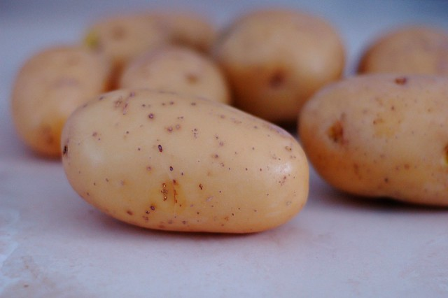 Yukon Gold potatoes by Eve Fox, The Garden of Eating, copyright 2015