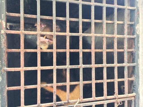 Gloria in cage 9