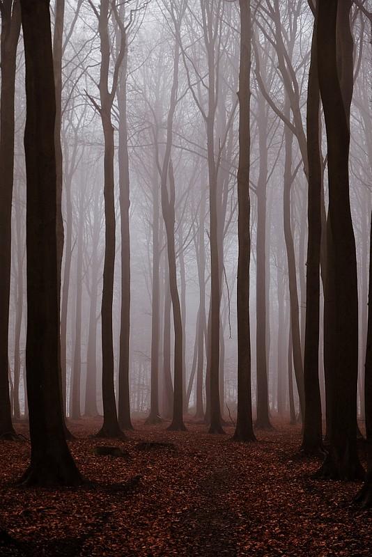 Romance with the fog