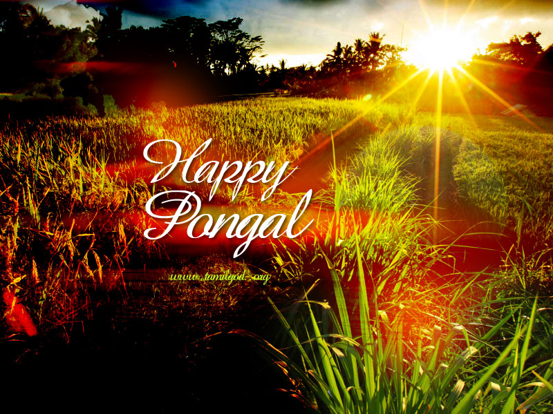 Happy Pongal Greetings