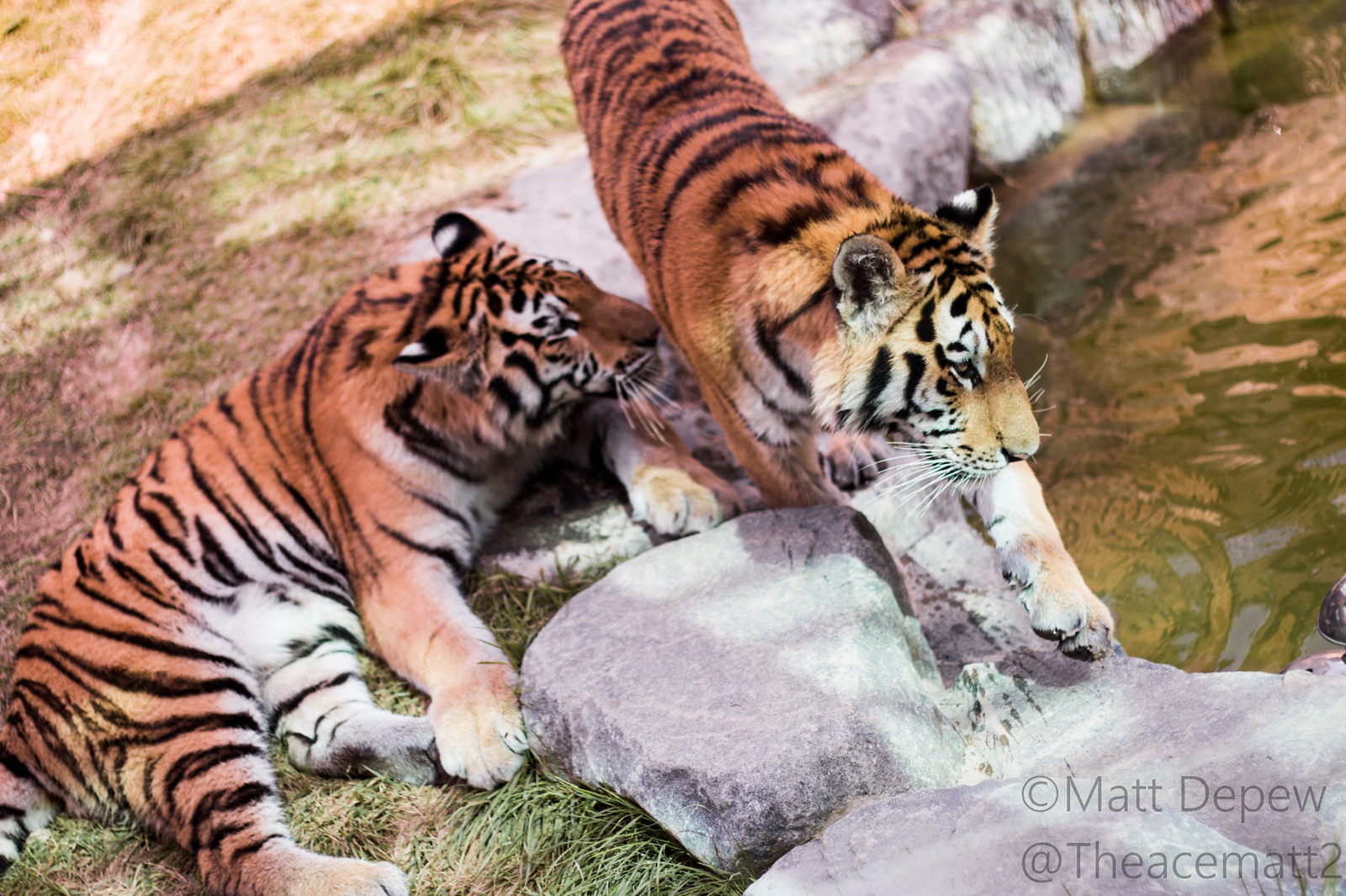 Myeongdong Market and Seoul Zoo, 29+30 August 2014