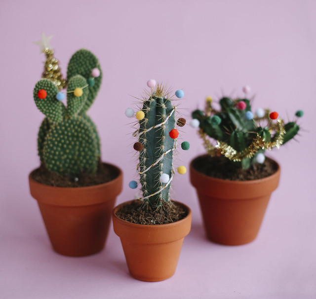 DIY Christmas Cacti, thecurlyhead, amelie n., the curly head, DIY, last minute gift idea, christmas-cacti, still-life photography, cacti, Geschenkidee, Weihnachtskaktus, Weihnachtskakteen, blog,