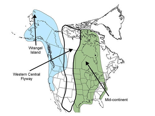 map of snow-geese-range2