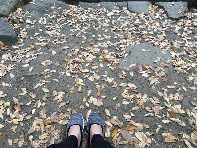 買雙好走的鞋來日本玩是王道,感謝得分妮勸敗skechers