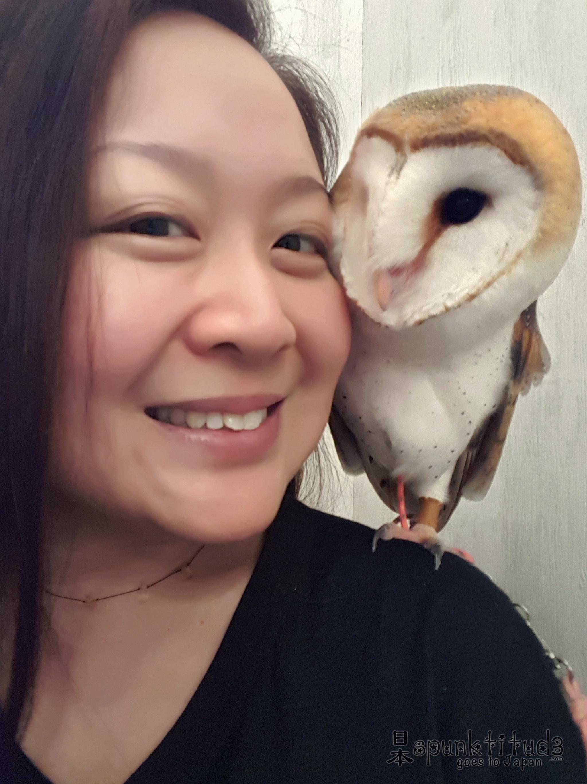 Akiba Fukurou Owl Café アキバフクロウ