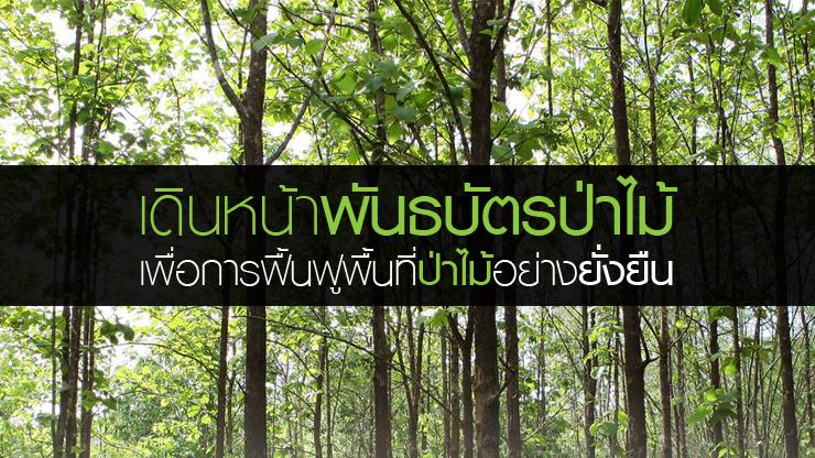 พันธบัตรป่าไม้