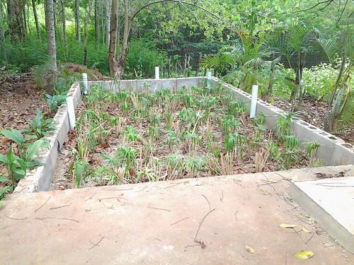 Planta Escuela Ambiental #1 & #2