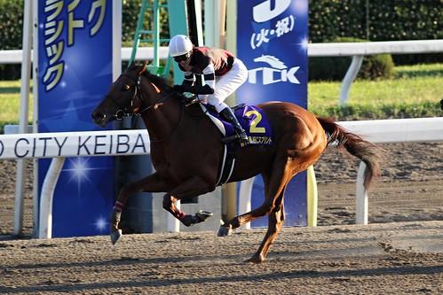 JBCスプリント勝ち馬 コーリンベリー(松山弘平)