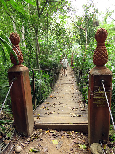 Suspension bridge on a Puerto Vallarta Botanical Garden Trail