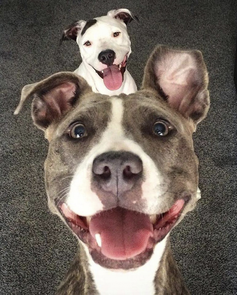 Смешные зверюшки вокруг нас - ПоЗиТиФфЧиК - сайт позитивного настроения!
