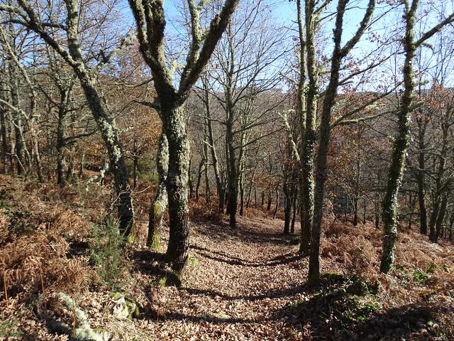 Bosque PR-G 177 Ruta Canón do río Mao