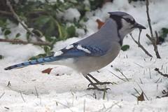 bird IMG_6323