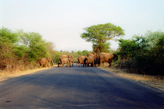 Your First Safari to The Kruger Park Elephant crossing