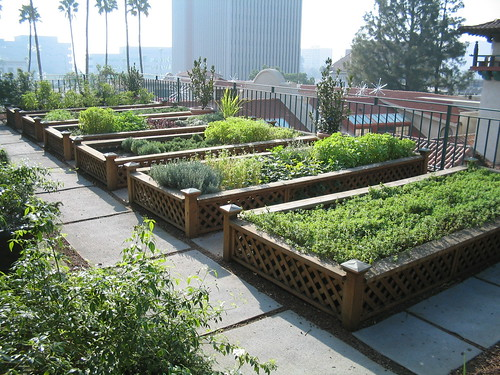 Herb garden on the rooftop | by pbev