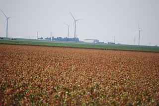 Wind Turbines over Cotton | by jcwadeaz