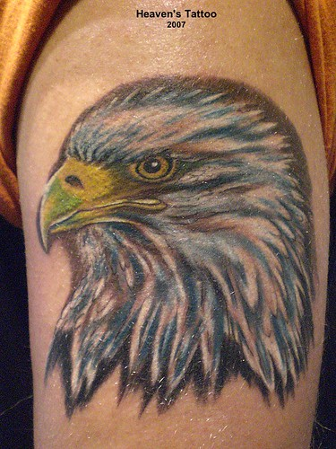 adler tattoo based on a real eagle photo ressource wouldn flickr. Black Bedroom Furniture Sets. Home Design Ideas