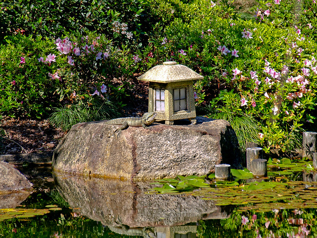 Japanese Garden - Brisbane Botanic Gardens Mt Coot-tha