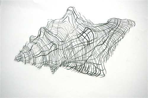 Contour Line Drawing Shell : Shell drawing homework contour of a for