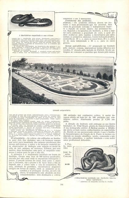 Ilustração Portugueza, No. 468, February 8 1915 - 31