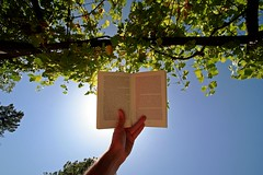 Reading book against sun | by Shots by me