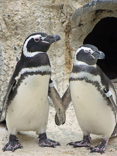 Penguin Love | by Nikki OK
