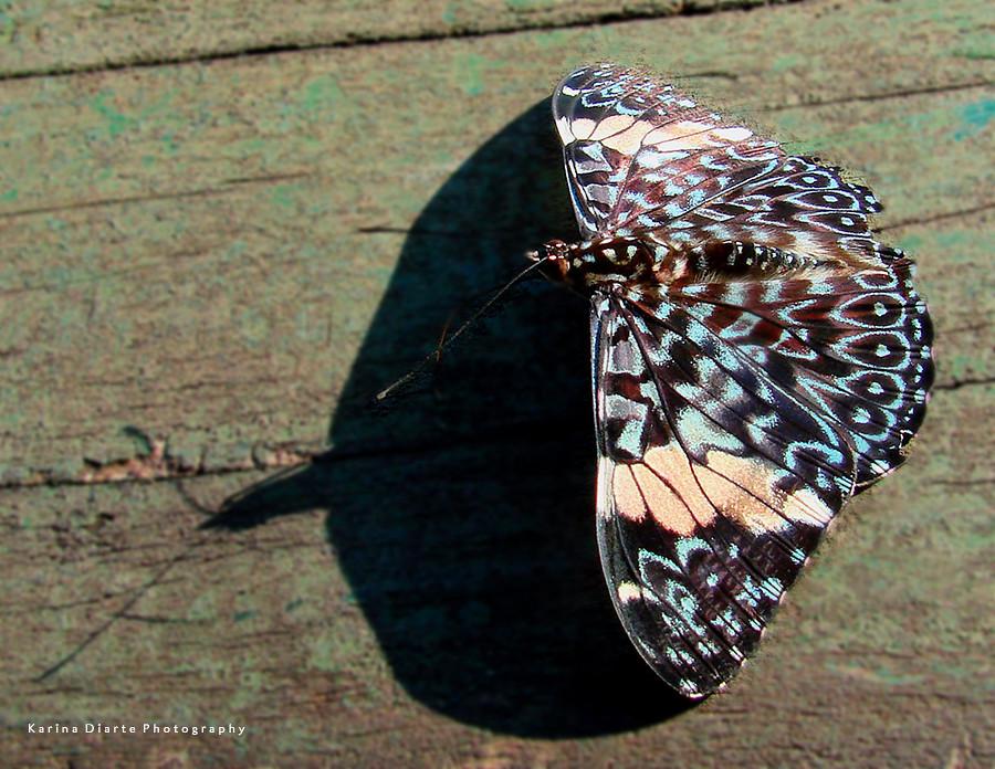 Mariposa tronadora / Sonorous butterfly