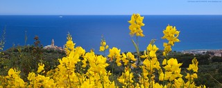 Broom - Ginestra - 2560x1024 | by funadium