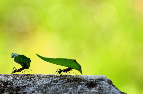 How Strong are the Ants! | by Arlete Reino Pellanda