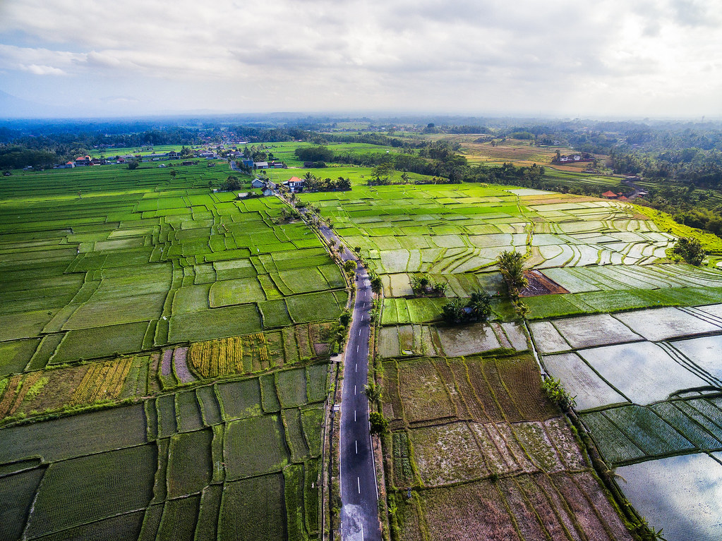 Indonesia Bali Rice Fields by Drone by Michael Matti