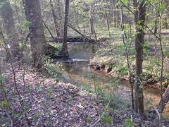 Turner Creek 2