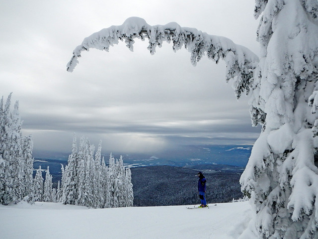Silver Star Mountain Ski Resort: Snow-laden trees