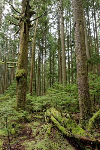 Baden-Powell Trail, 27 Feb 2016