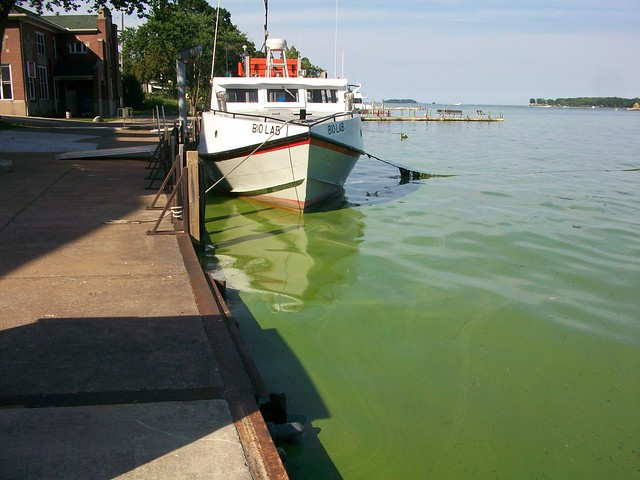 Algal Bloom at Stone Lab